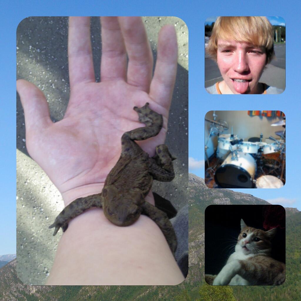 Bilder av en hand med en padde og en gutt, trommer og en katt