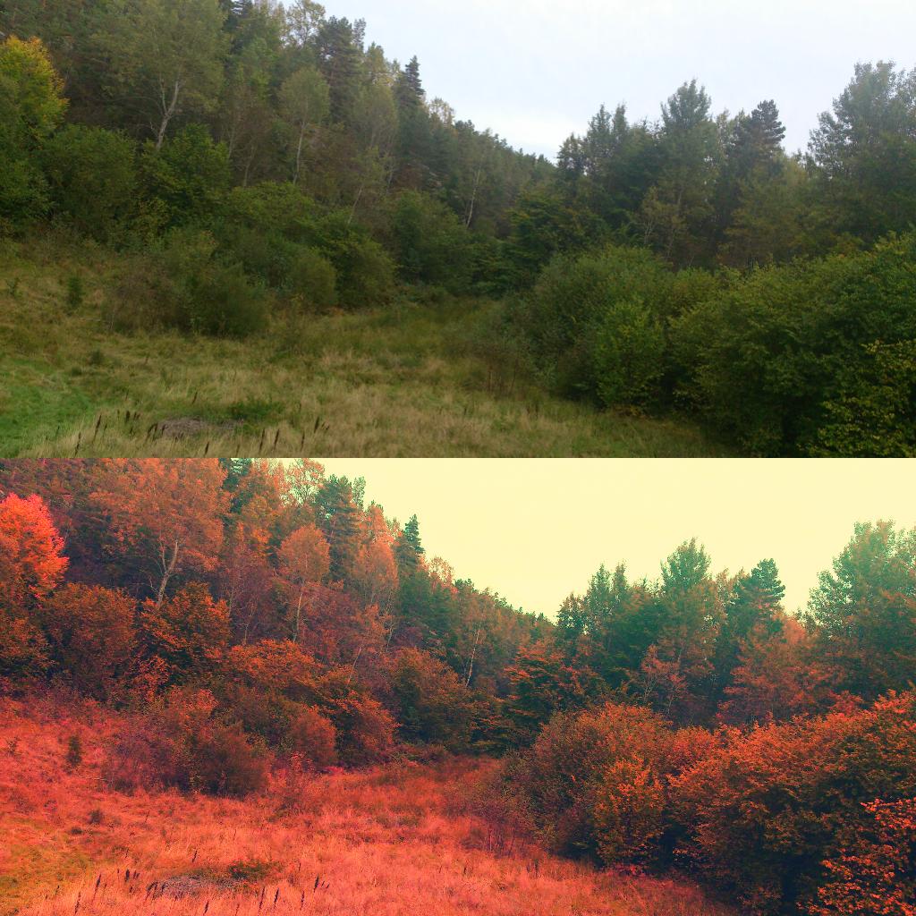 Bilde redigert i picsart skog med og uten effekter